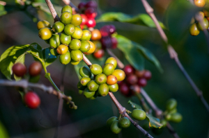 Drinking sustainable coffee is very important to us